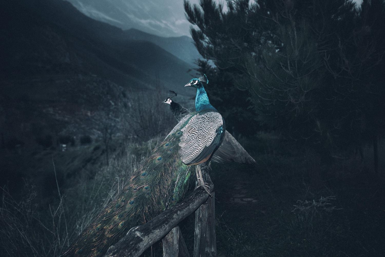 Mystic Moutains - La Beauté Du Sexe Est Un Cadavre - Texte Clément Milian - Photo Yorgos Yatromanolakis